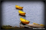 Canvas Photo - Three Dories - 11 x14